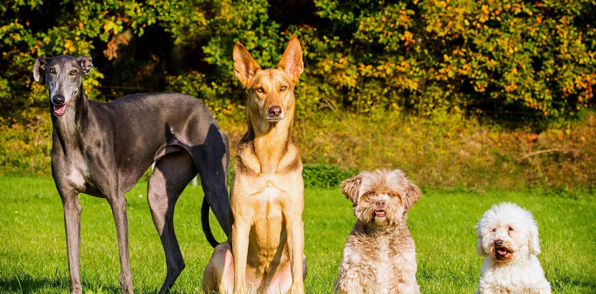 Hundeleben retten e.V.