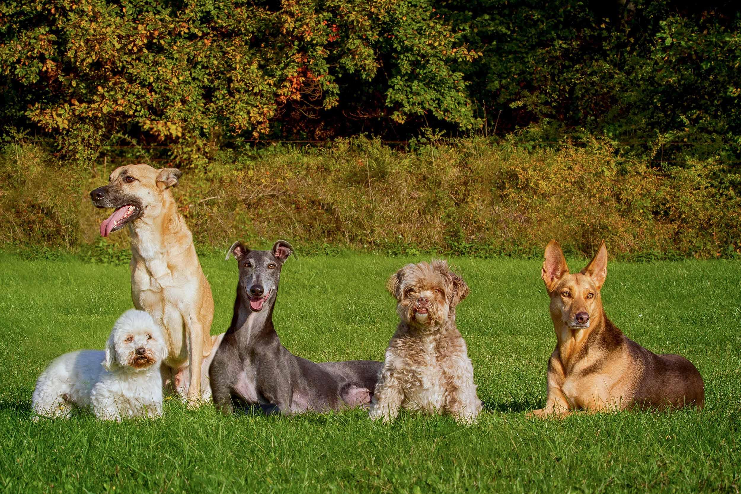Hunde Leben